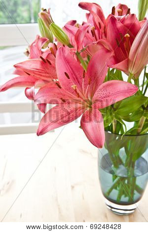 Fresh Pink Lilies