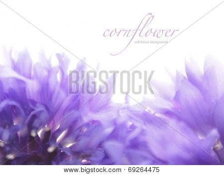 Soft focus cornflower background with copy space. Made with lens-baby and macro-lens.