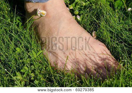 Bare Foot Woman Leg In Dewy Morning Lawn