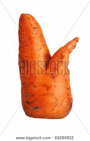 Large Crooked Carrot