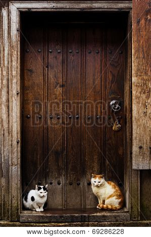 Cats Waiting To Go Inside. Cats Sitting By A Barn Door