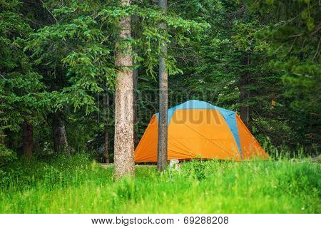 Forest Campground Tent