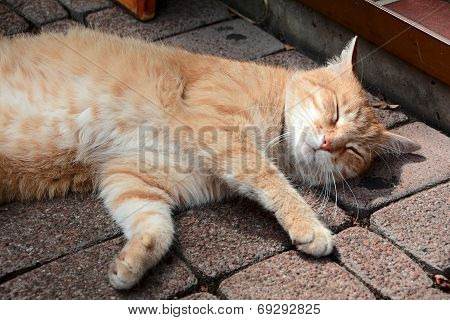 a relaxed cat