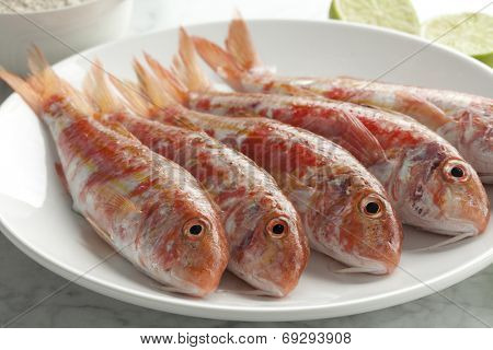 Fresh striped red mullets on a dish