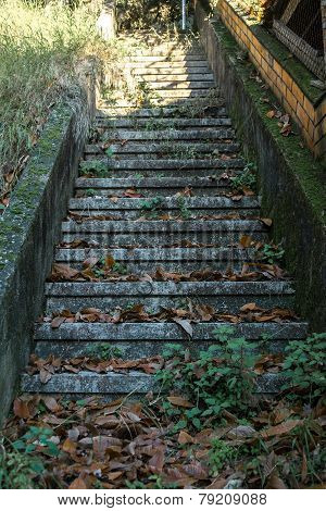 Staircase With Leaf Litter