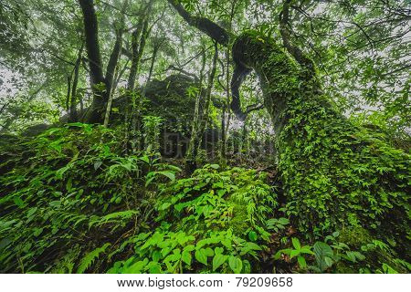 tree in lush tropical jungle