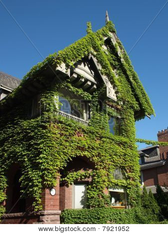 Vine covered house