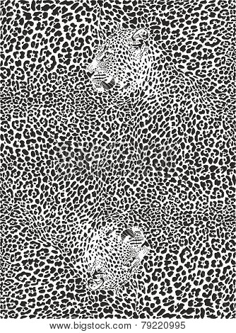 Background with Leopards
