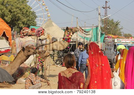 Indian People At Pushkar Fair