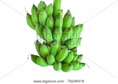 Banana Bunch On Tree Isolated On White Background