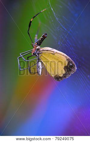 Spider Eating  Bait