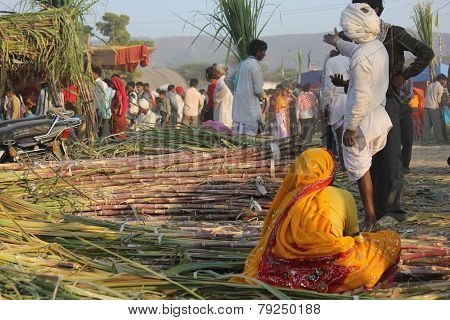 Indian woman from the backside working on bamboo canes