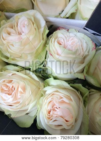 Light Green And Cream Colored Roses