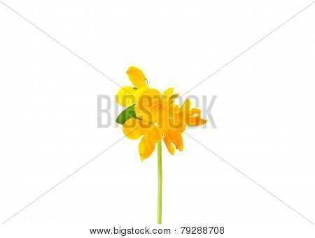Birds-foot-trefoil (lotus Corniculatus)
