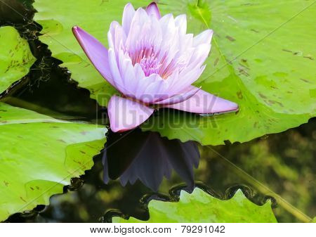 Flower in lake