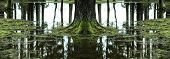 pic of peaceful  - Reflections of trees in flooded forest - JPG