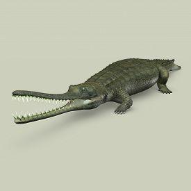 stock photo of crocodilian  - The gharial - JPG