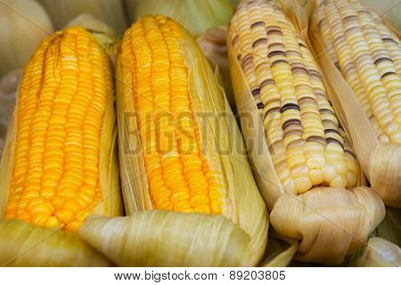 Corn On The Cob For Sale At Vendor's Stall