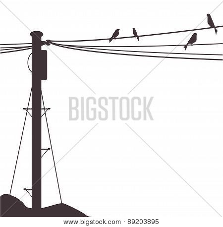 Telegraph Pole Birds