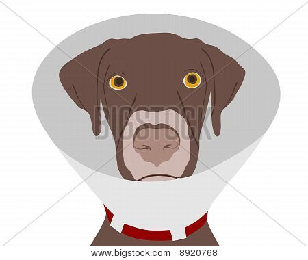 Dog With Ruff