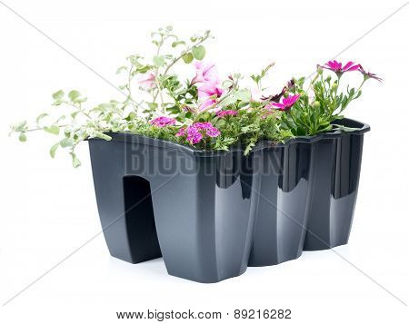 Plastic flower box with fresh flowers shot on white background