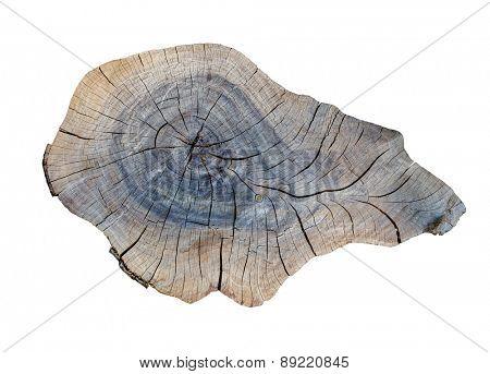 cracking teak tree slice texture on the white