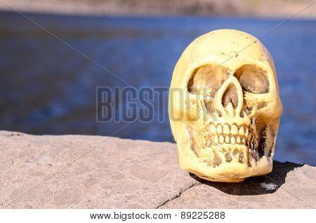 Abandoned Human Skull Sculpture