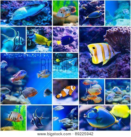 Collage of photos colorful fish in aquarium saltwater world