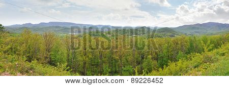 Wide panorama of the Appalachian Mountains in April with fresh green spring leaves