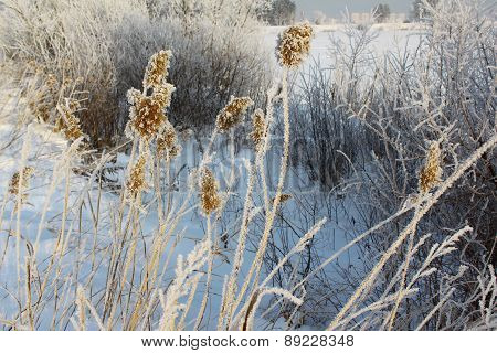 Spikes in frost