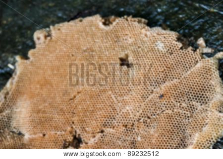 Blurry Image Of Beehive On The Stone