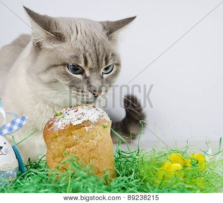 Cat, Cake And Chicks.