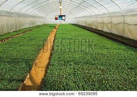Organic Greenhouse