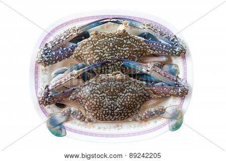 Two Horse Crab On White