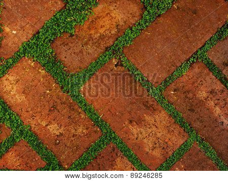 Red shaded bricks with gaps filled by leafy green growth