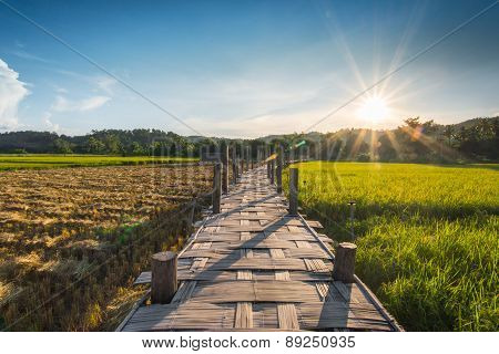 Wooded Bridge In Cornfield Between Sunset