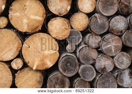 Woodpile with tree trunks of different ages