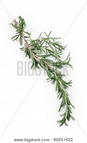 Twig of rosemary.