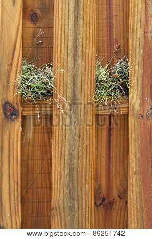 Two Air Plants Growing On Wooden Fence