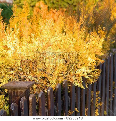 Beautiful, Bright Yellow Foliage Of Brown Wooden Wall, Autumn Day. Selective Focus