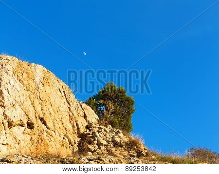 Crescent Moon In The Clear Blue Sky, Tree On A Mountain Top In A Contrasting Bright Sunlight, Contra