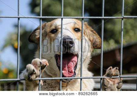 Closeup Of A Dog Looking Through The Bars Of A Fance