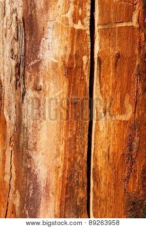 Detail Of An Old Dried Cherry Tree Trunk