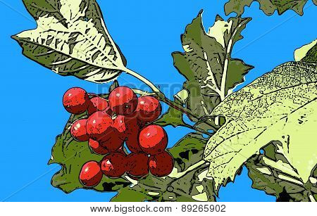 Vector Illustration Red Viburnum