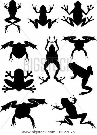 Frogs Set