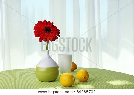 Color gerbera with glass of milk and lemons on table on curtains background