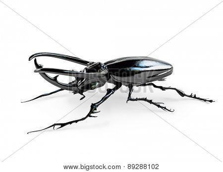 black rhinoceros beetle. 3D rendering