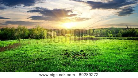 Green grass and trees