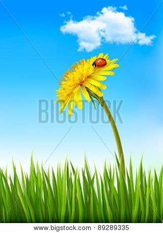 Dandelion on a blue sky and green grass background with a ladybug. Vector.