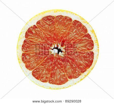 grapefruit slice, vector